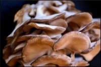 Майтаке лечение грибами